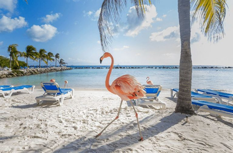 aruba island, pink flamingos, beach