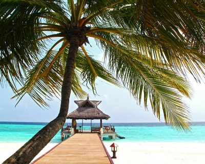 beach, coconut tree, white sand maldives